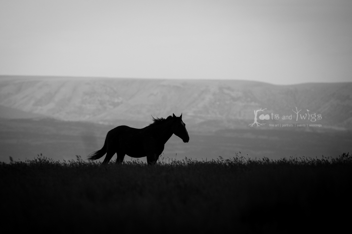 Wild Horse as Storm Brews