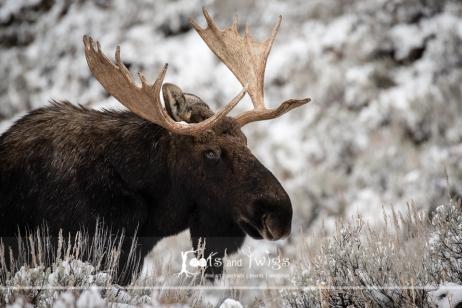 750_8564_LR960H2O_Fort-Collins-Colorado-Photographer